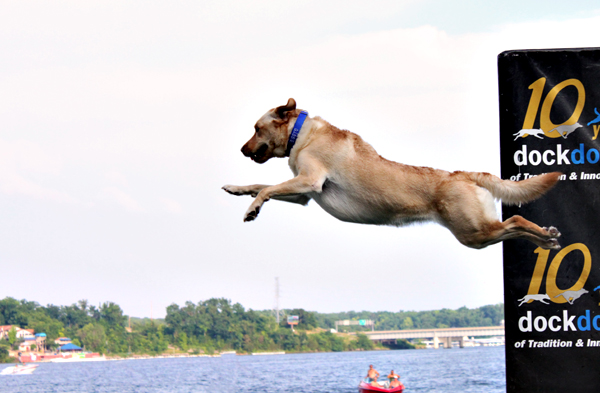 Dog Days Canine Cannonball Event at the Lake of the Ozarks